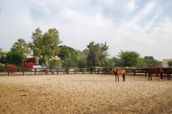 Polo Club Dubai 23