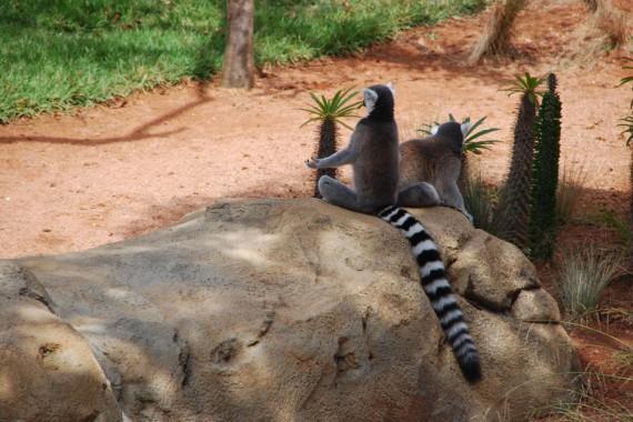 Taronga Zoo 05