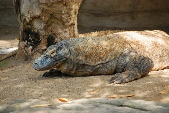 Taronga Zoo 06