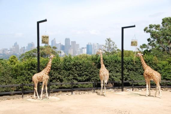 Taronga Zoo 08