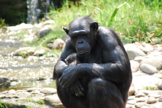 Taronga Zoo 09