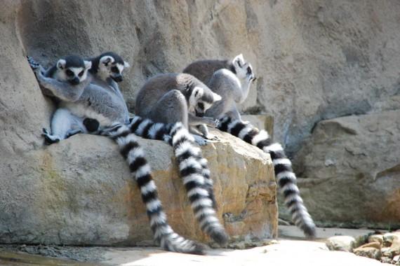 Taronga Zoo 12