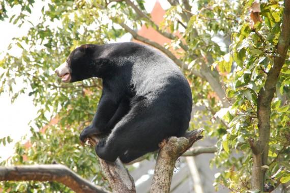 Taronga Zoo 14