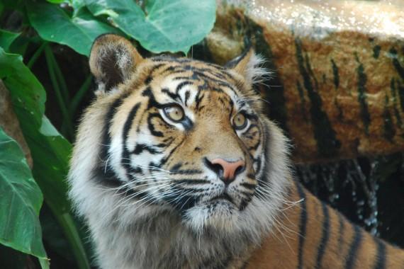 Taronga Zoo 15