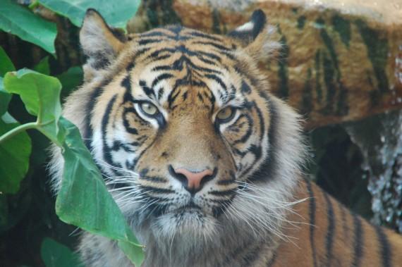 Taronga Zoo 16