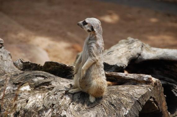 Taronga Zoo 17