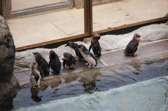 Taronga Zoo 21