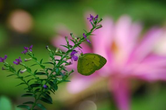 Kuala Lumpur Butterfly Park (10)