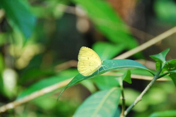Kuala Lumpur Butterfly Park (11)