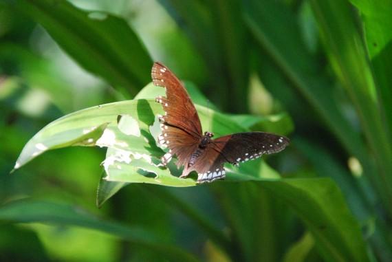 Kuala Lumpur Butterfly Park (14)