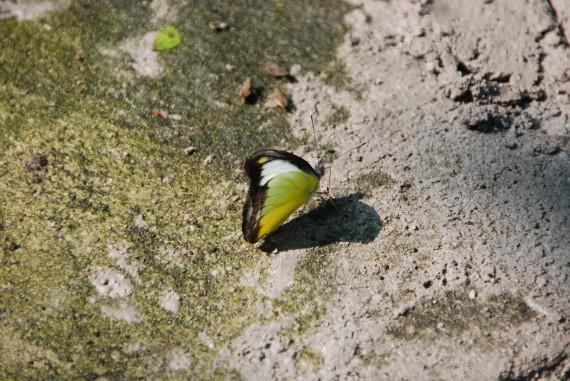 Kuala Lumpur Butterfly Park (17)