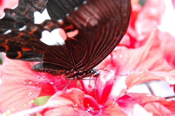 Kuala Lumpur Butterfly Park (2)