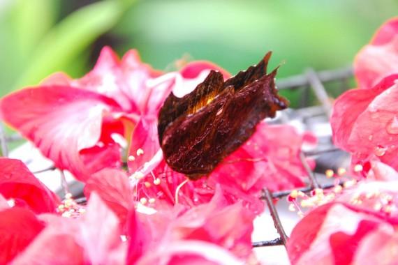 Kuala Lumpur Butterfly Park (24)