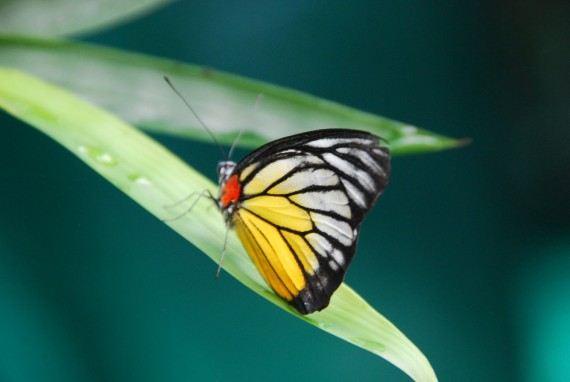 Kuala Lumpur Butterfly Park (25)