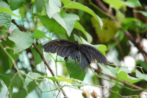 Kuala Lumpur Butterfly Park (26)