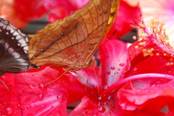 Kuala Lumpur Butterfly Park (29)