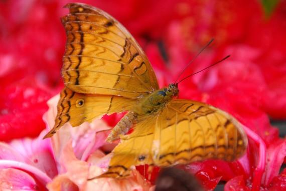 Kuala Lumpur Butterfly Park (30)