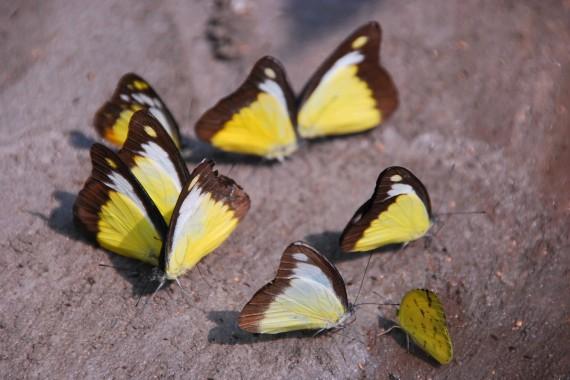 Kuala Lumpur Butterfly Park (4)