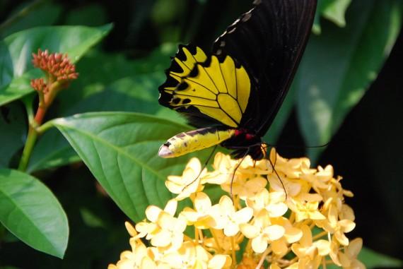 Kuala Lumpur Butterfly Park (5)
