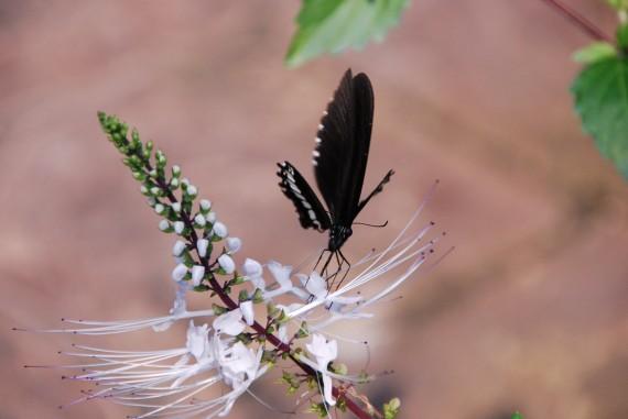 Kuala Lumpur Butterfly Park (7)