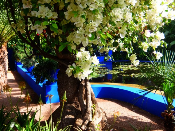 Jardin Majorelle (12)