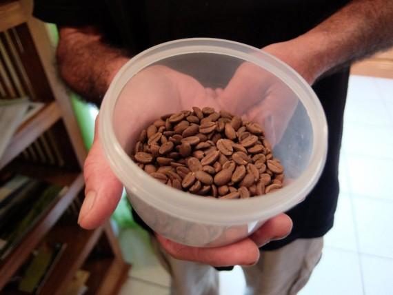 Laurina et plantation café (3)