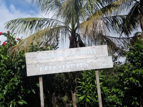 Laurina et plantation café (32)