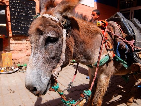 Souks Marrakech (10)