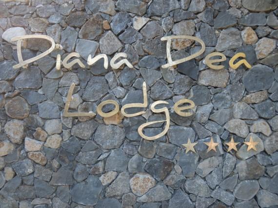 Diana Dea (9)