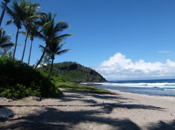 Palm Réunion (11)