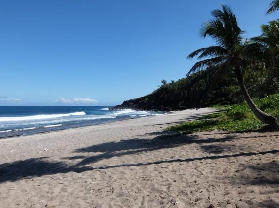 Palm Réunion (12)