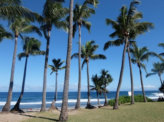 Palm Réunion (13)
