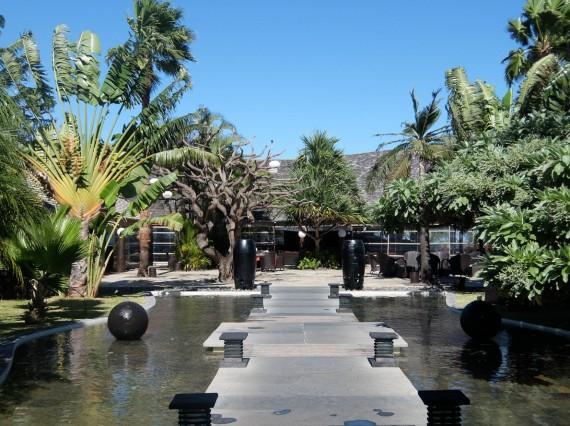 Palm Réunion (14)