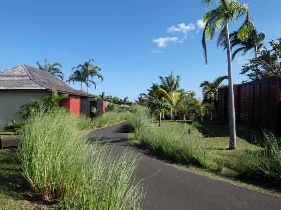 Palm Réunion (16)