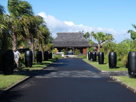 Palm Réunion (19)