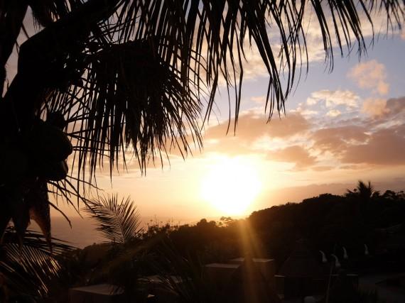 Palm Réunion (52)