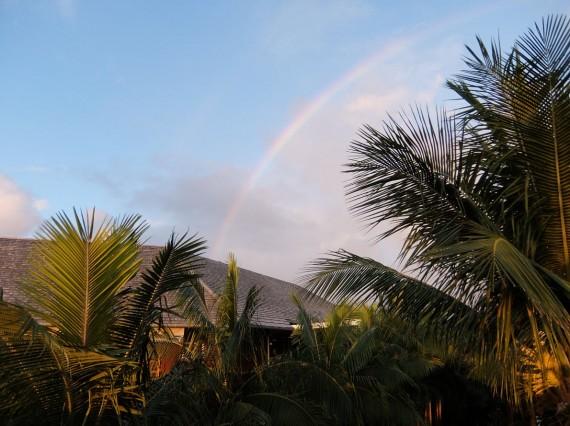 Palm Réunion (53)