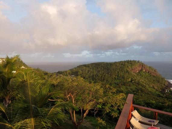 Palm Réunion (56)