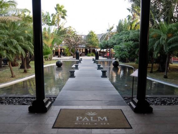Palm Réunion (64)