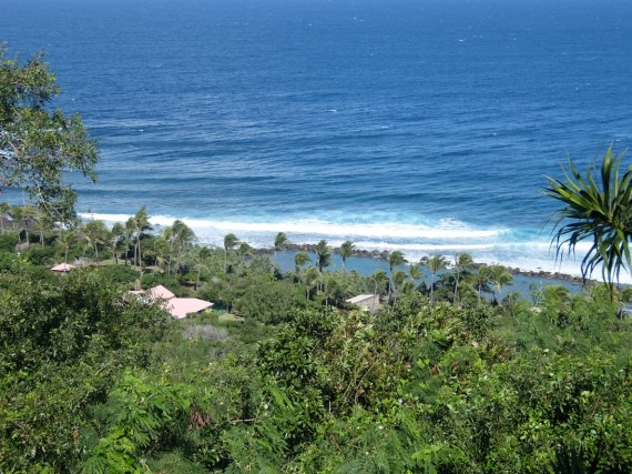 Palm Réunion (9)