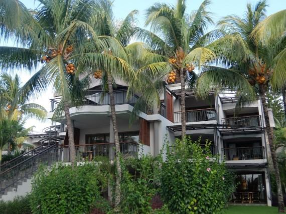 Maurice Royal Palm (28)