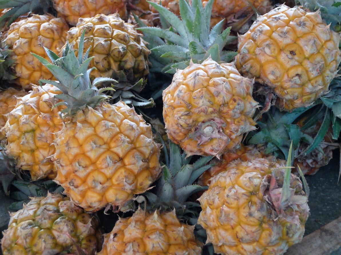 Mini ananas
