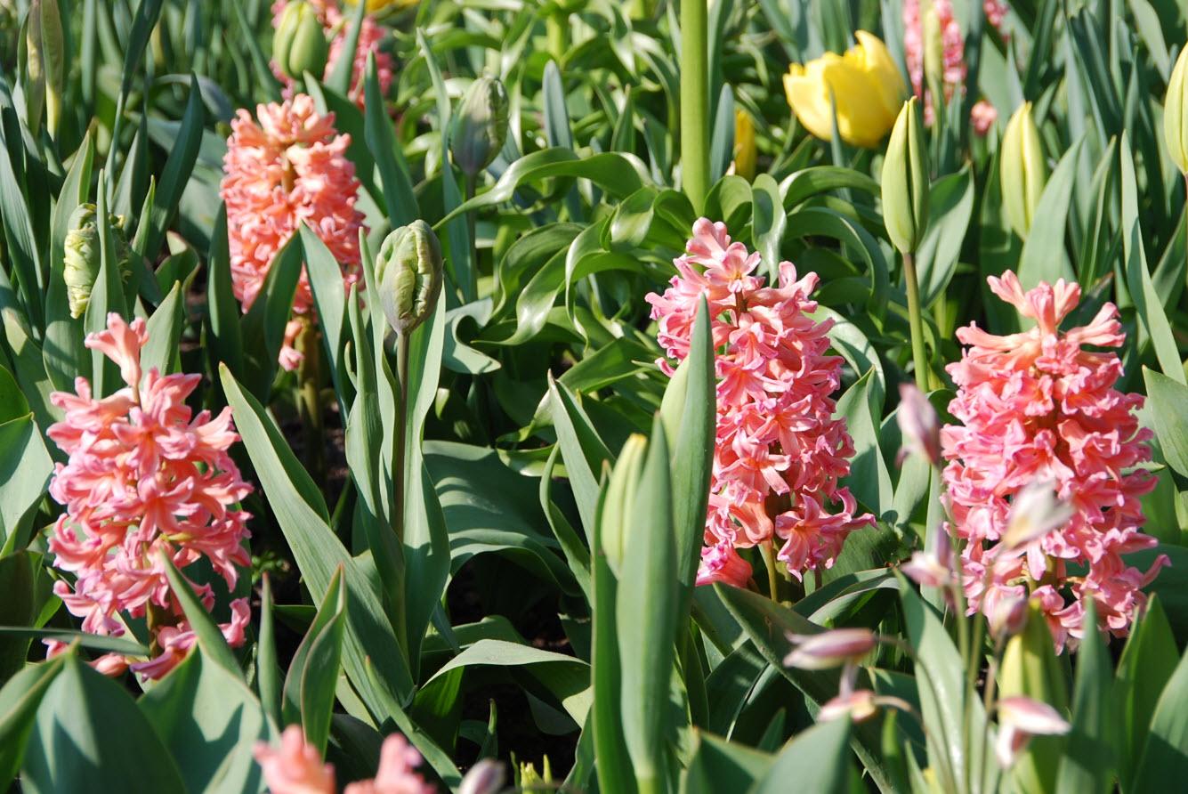 Parc floral Hollande
