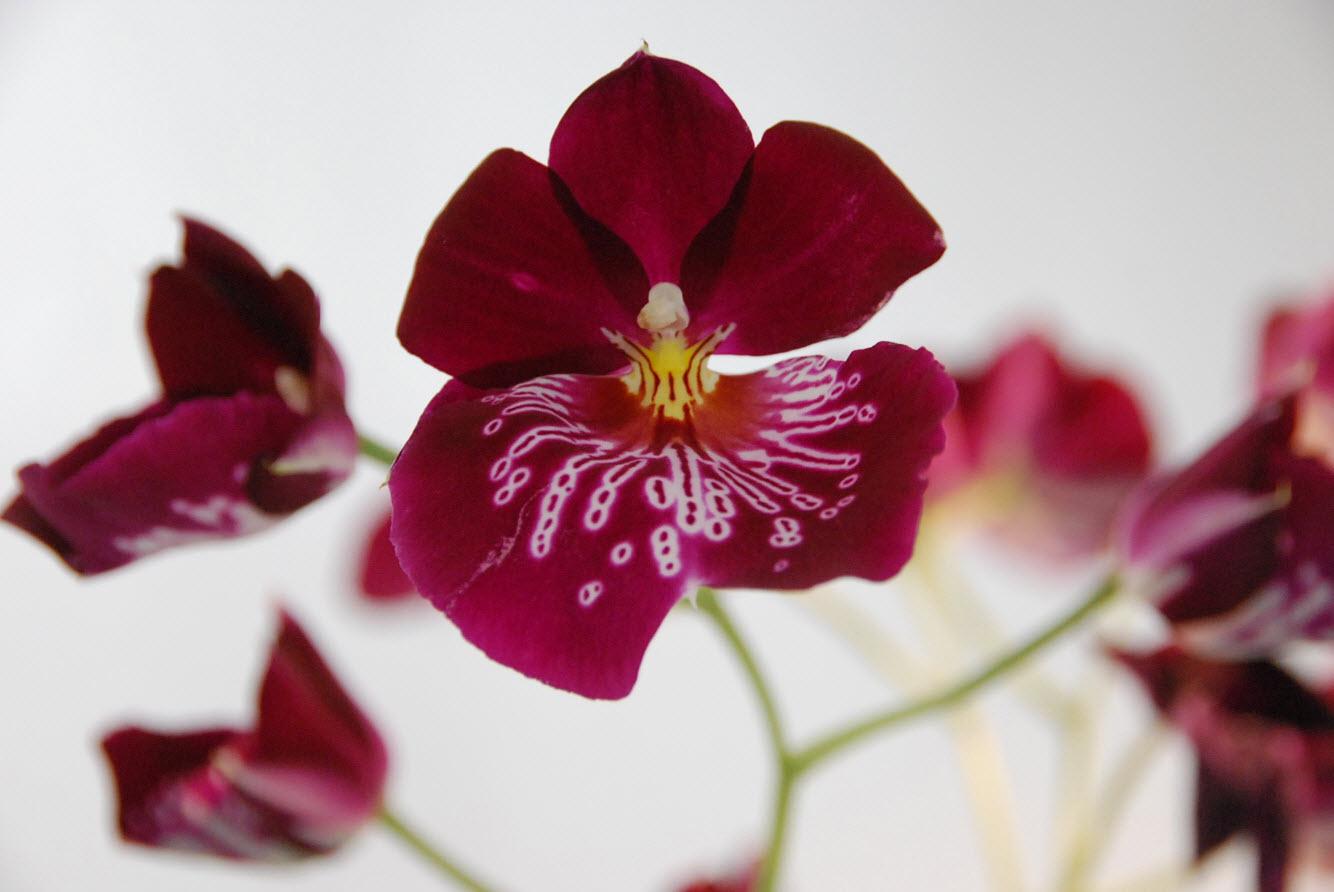 Parc aux orchidees a Amsterdam