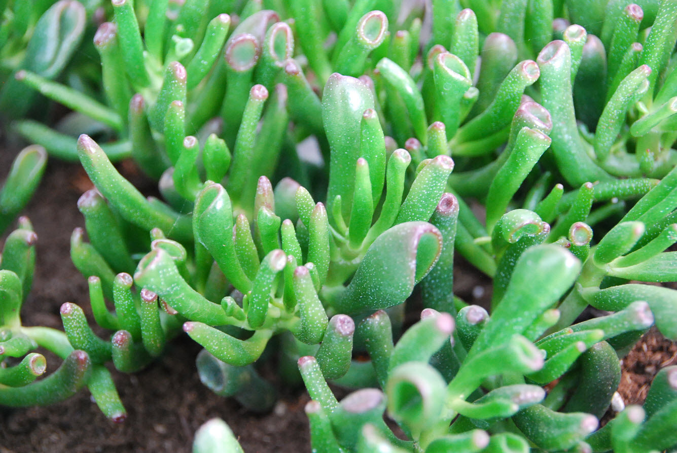 Exposition de plantes