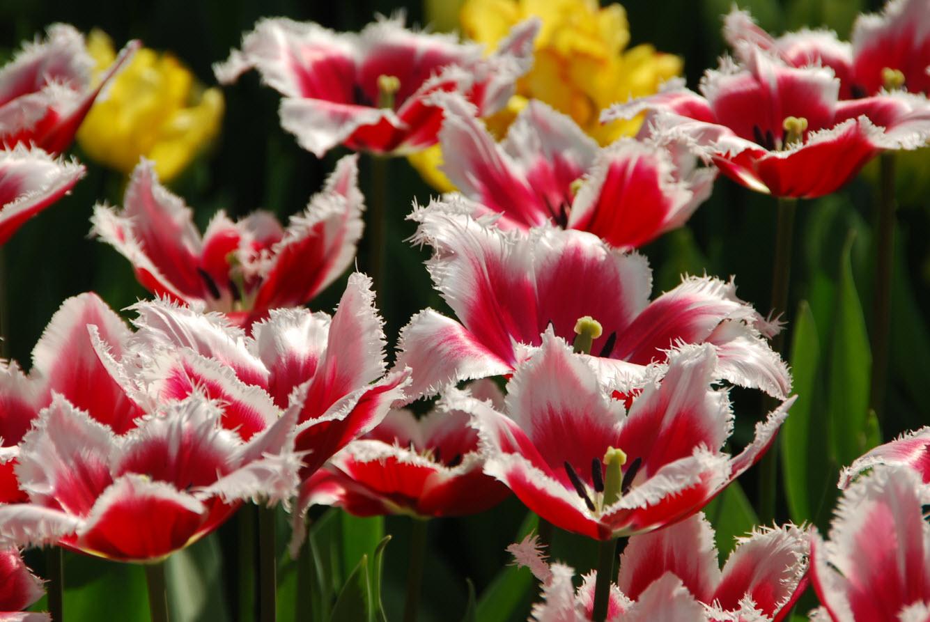 Parc floral Amsterdam