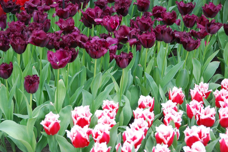 Assortiment de fleurs de couleur