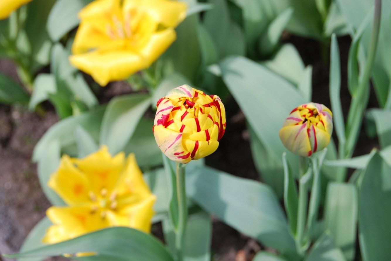 Boutons de fleur