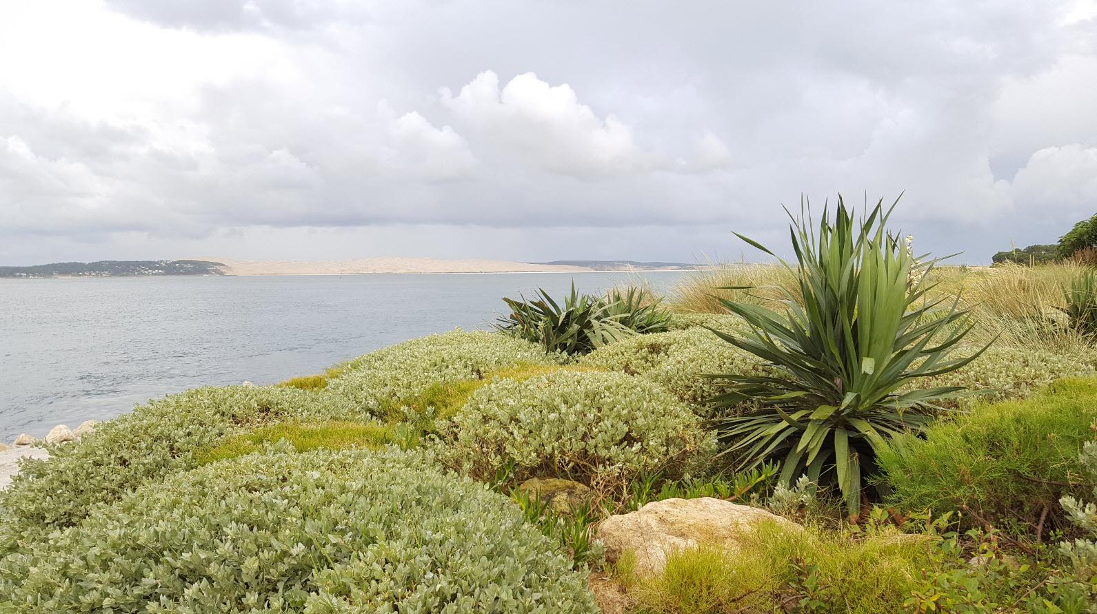 La dune depuis le Cap Ferret