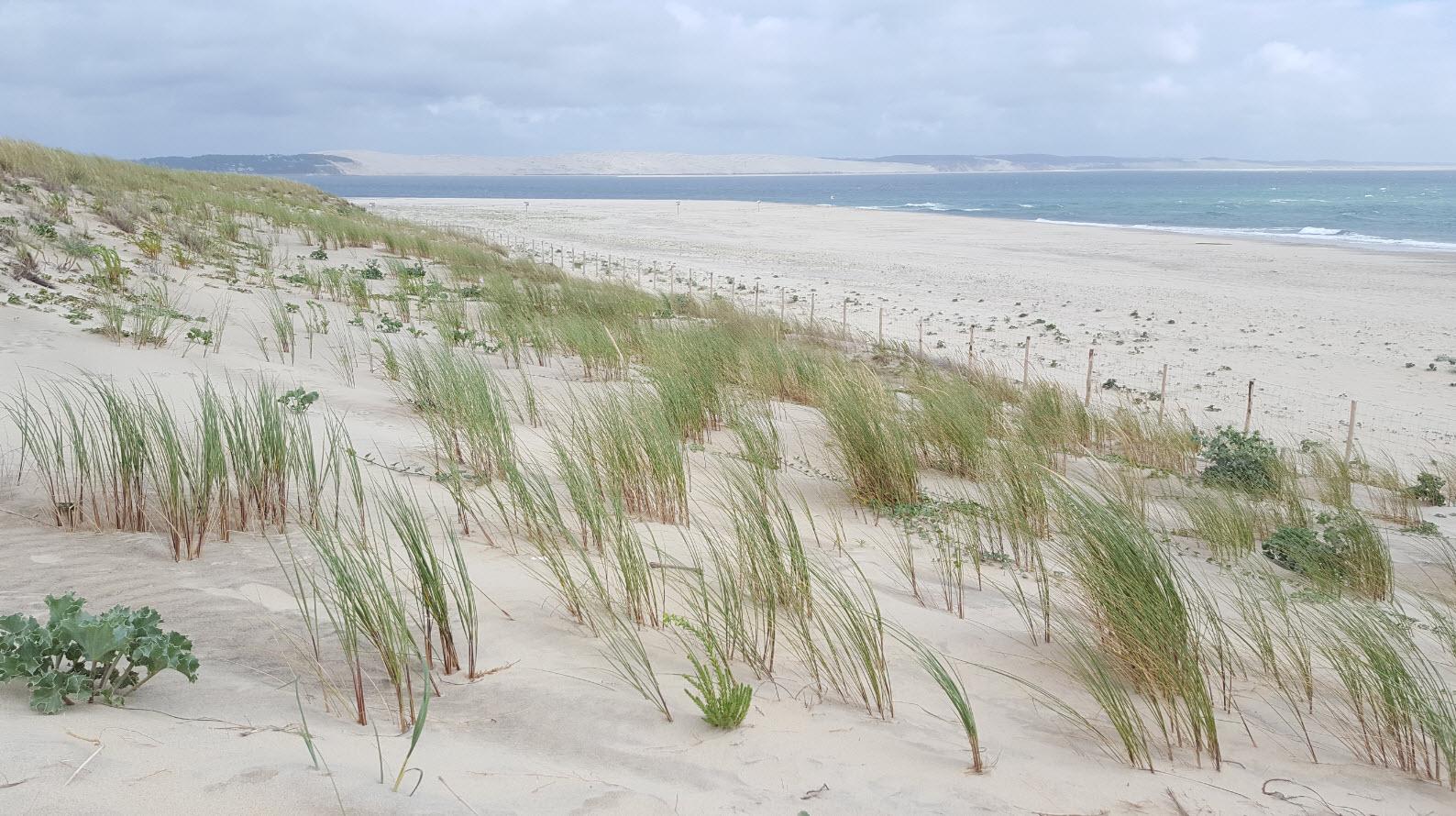Dune du Pyla depuis le Cap Ferret